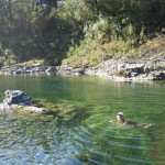 Swimming in the Pelorus River